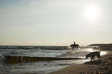 Woman with dog riding horse in sunny ocean