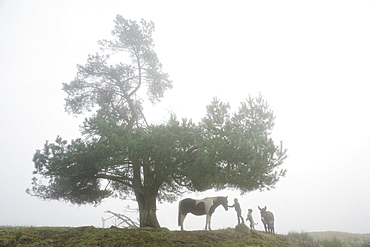 Girl with dog, donkey and horse under rural tree in foggy field