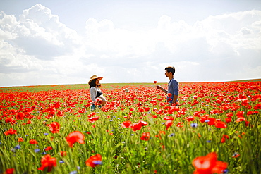 Pregnant couple in sunny, idyllic red poppy field