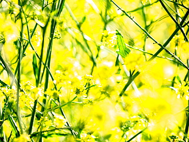 Close up yellow flowers