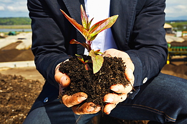 Close up man cupping plant sapling in dirt