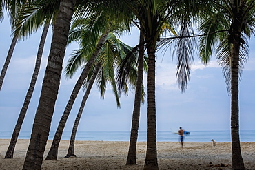 Male surfer and dog on tropical ocean beach with palm trees, San Pancho, Nayarit, Mexico
