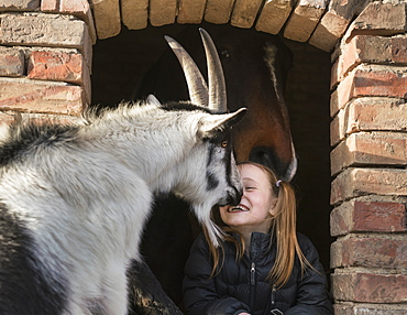 Happy girl with goat and horse in barn window