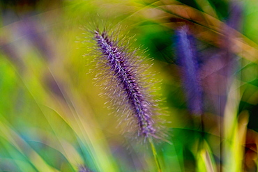 Close up detail fuzzy purple flower