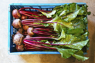 View from above organic beets and beetroot in crate