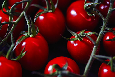 Close up vibrant red vine cherry tomatoes