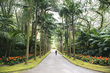 Woman walking along landscaped, palm tree lined driveway, Azores, Portugal
