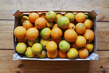 Crate of fresh harvested citrus fruit