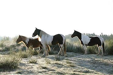 Brown and white horses in sunny grass