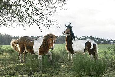 Brown and white horses in rural field