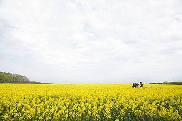 Girl riding horse in vibrant yellow canola field