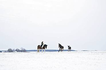 Girl riding horse in snowy rural field with donkeys
