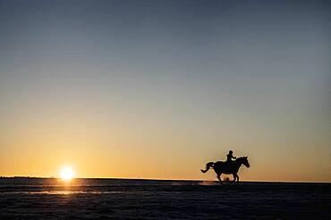 Silhouette girl riding horse in sunset field