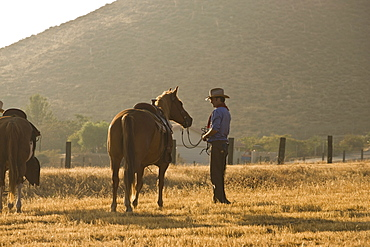 A cowboy standing in a field with horses