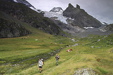 Hikers walking in the swiss mountains