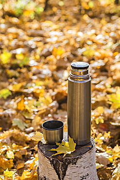 A thermos and a thermos lid on a tree stump in autumn