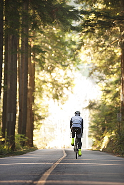Rear view of cyclist riding bicycle on road by trees