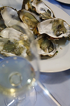 A plate of raw oysters and a glass of white wine, close-up