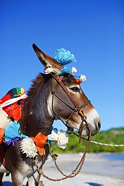 Donkey decorated with paper flowers on sunny beach, Punta de Mita, Nayarit, Mexico