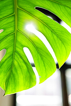 Close up vibrant green tropical plant leaf