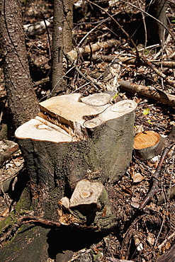 Tree stump in a forest
