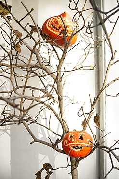 Jack O Lanterns in tree