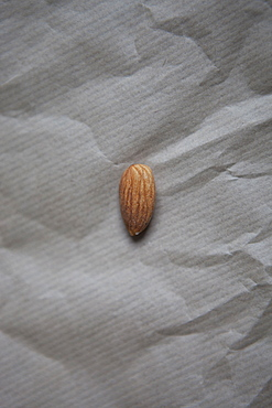 Single almond on paper