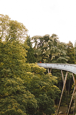 Elevated bridge among trees, Westonbirt, UK