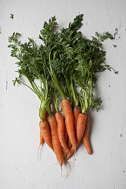 Directly above shot of carrots on table