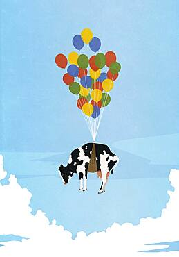 Helium balloon bunch lifting cow in sky