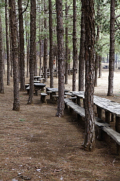 Wooden picnic tables in a forest