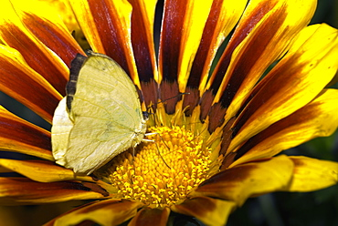 Close-up of a butterfly pollinating a flower