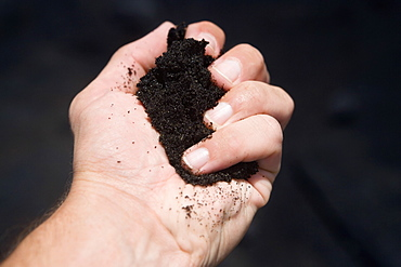 Close-up of a person's hand holding soil