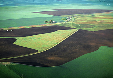Contour plowing of green winter wheat and lentil fields