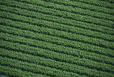 Aerial of farm fields