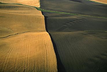 Contour plowed fields of golden wheat, Washington state