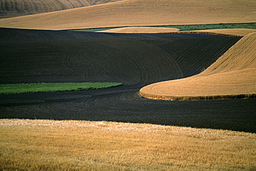 Contour plowed fields, Washington state