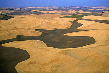 Aerial view of contour plowed fields, Washington state