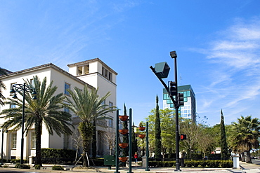 Low angle view of palm trees in front of a building, Orlando, Florida, USA