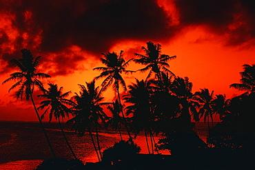 Silhouette of palm tree at dusk, Majuro, Marshall Islands