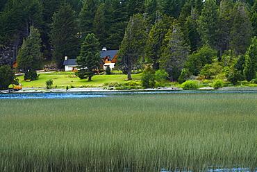 Tall grass in a lake, Lake Nahuel Huapi, San Carlos De Bariloche, Argentina