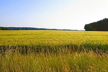 Crop in a field, Loire Valley, France