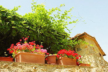 Low angle view of potted plants on the wall of a house, Siena Province, Tuscany, Italy