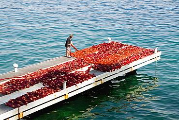 High angle view of a fisherman man holding commercial fishing net, Marina Grande, Capri, Sorrento, Sorrentine Peninsula, Naples Province, Campania, Italy