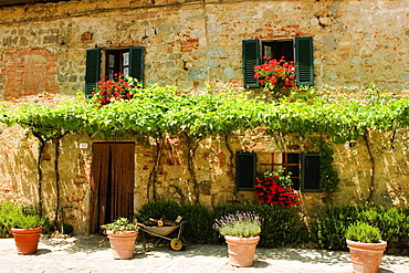 Potted plants outside a house, Piazza Roma, Monteriggioni, Siena Province, Tuscany, Italy
