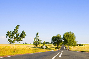 Road passing through a field, Loire Valley, France