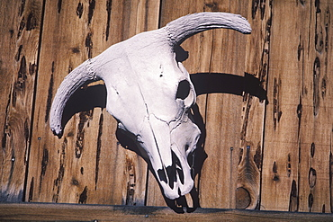 Close-up of an animal skull hanging on a wooden fence
