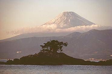 Tree on an island with a mountain in the background, Mt Fuji, Suruga Bay, Shizuoka Prefecture, Japan