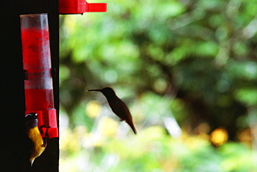 Side view of two hummingbirds near a red solution