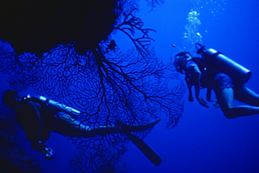 Underwater view of two scuba divers